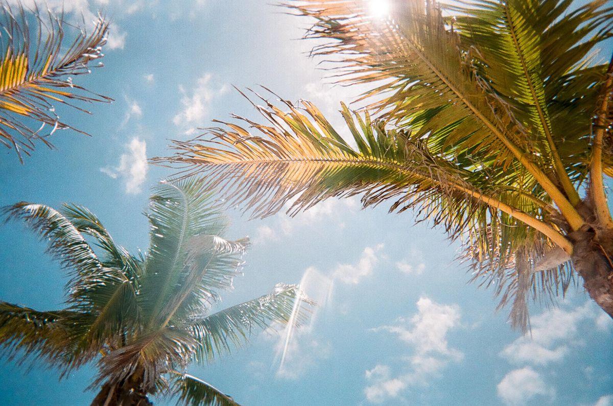 World Wide Technology Joins Florida Technology Council Wwt