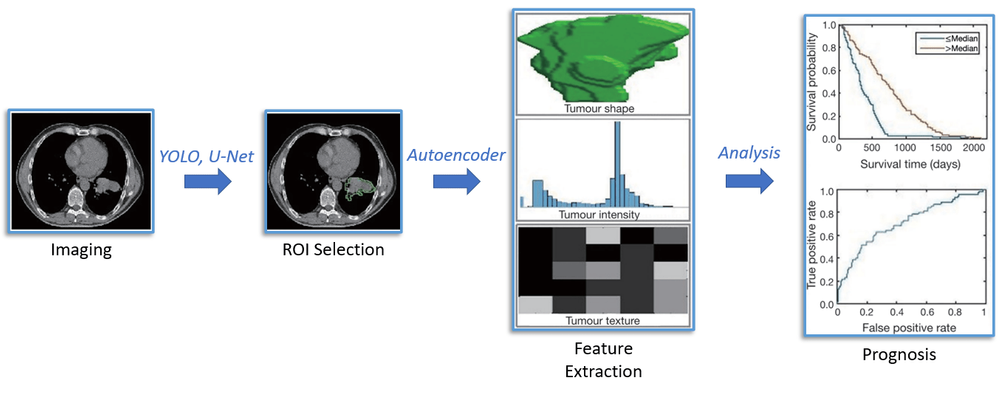 Figure 1: Implementation of CNNs into radiomics pipeline. CNNs such as YOLO or U-net are used to identify the tumor ROI. The relevant clinical features are then extracted to an embedding using a CNN autoencoder. Finally, the features are analyzed to aid physicians in prognosis.